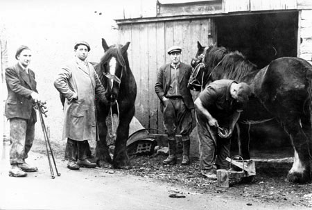 A blacksmith shoeing horses in Compton Dundon, c.1950s.