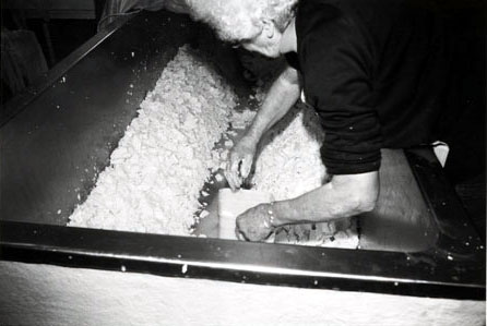Mary Duckett making Caerphilly cheese, Heath House, Wedmore.